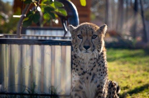 保護, 動物, 動物園 的 免費圖庫相片