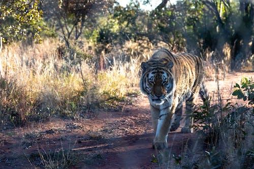 保護, 動物, 天性 的 免費圖庫相片