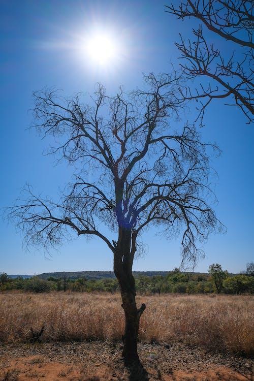 國家, 天性, 太陽 的 免費圖庫相片
