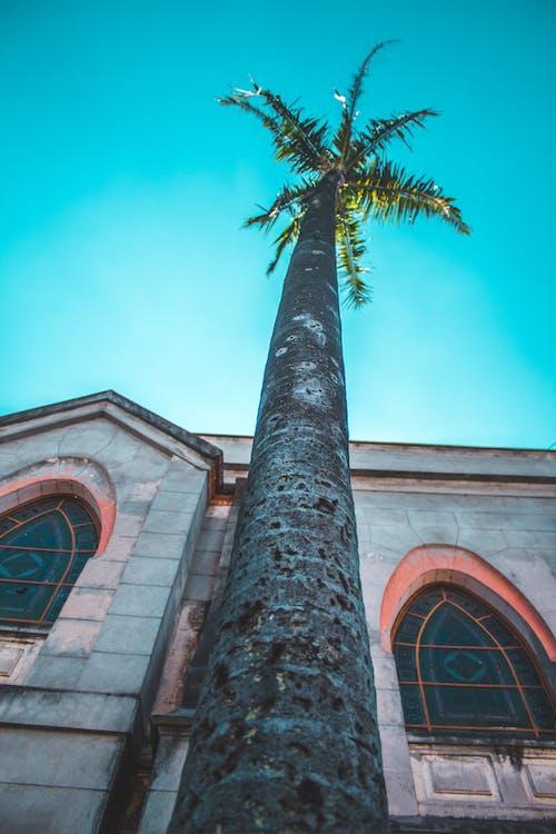 Foto d'estoc gratuïta de arbre, arquitectura, cel, edifici