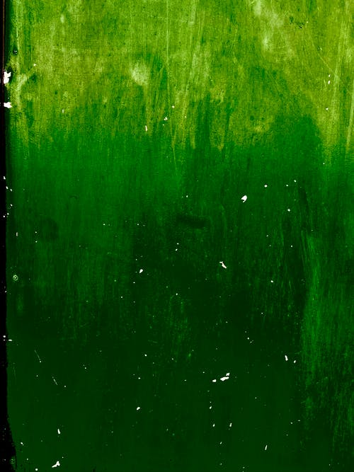 Free stock photo of green, green wall, wall