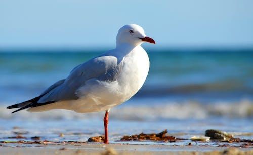 Free stock photo of beach, beaches, bird photography