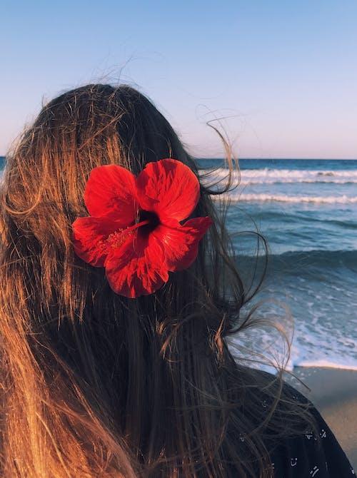 Gratis lagerfoto af blomst, dame, ferie, flora