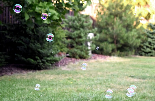 Free stock photo of grass, lawn, bubbles