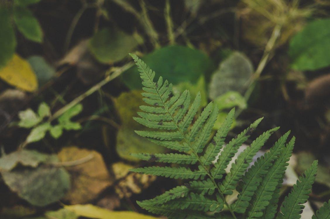 detailný záber, hĺbka ostrosti, papraď