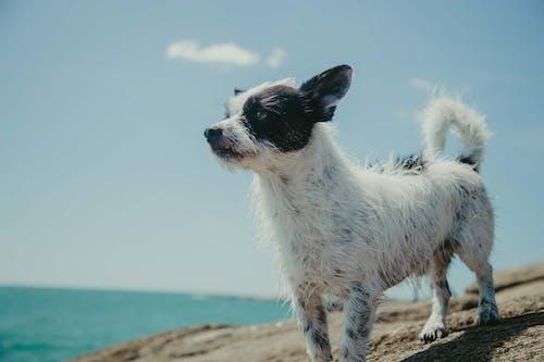 Ảnh lưu trữ miễn phí về ban ngày, biển, cận cảnh, chân dung con vật