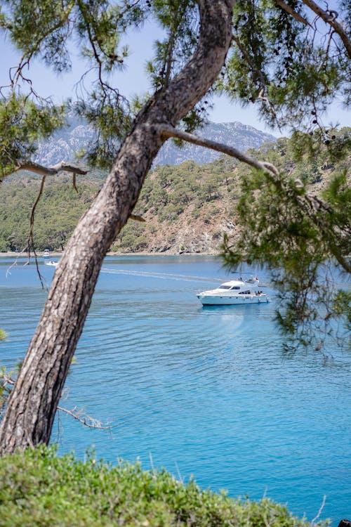 Immagine gratuita di acqua, albero, barca