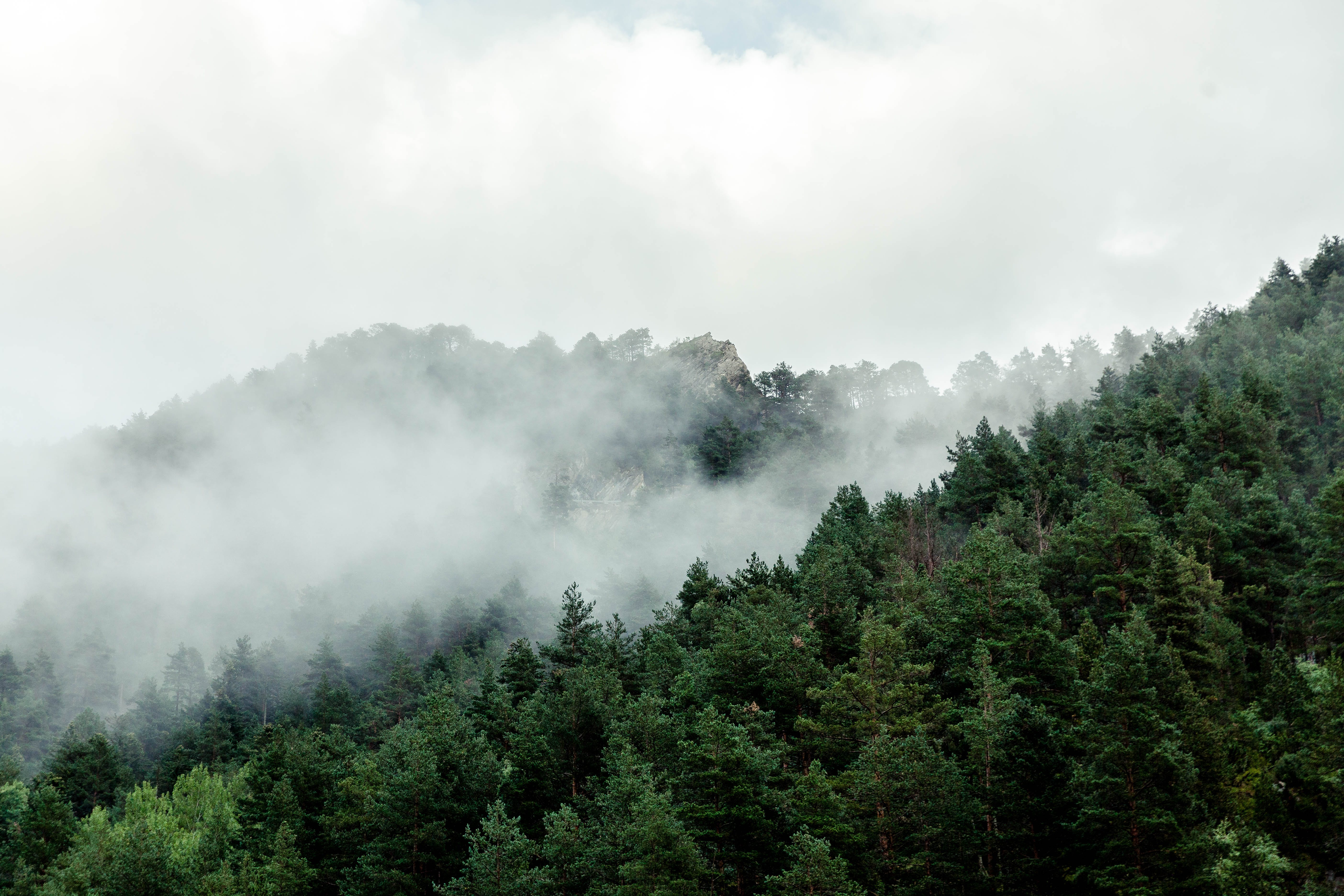Free stock photo of mountains, forest, trees, fog