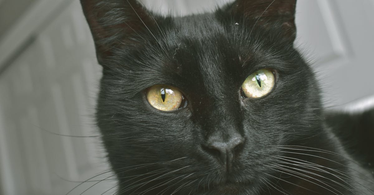 Free stock photo of #cat #black #kitty #animal #cute