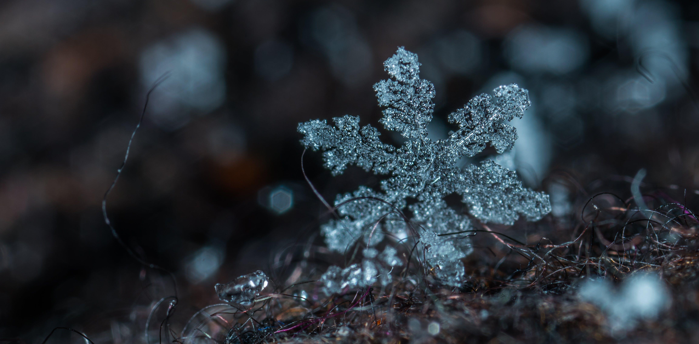 Macro Photography of Snowflake
