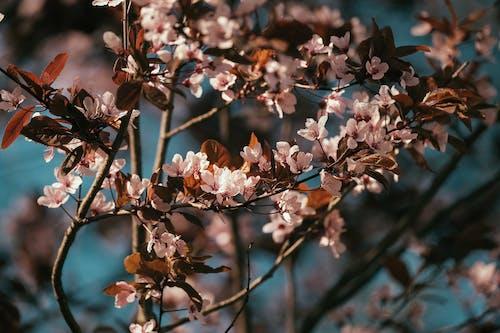 シーズン, パーク, フローラの無料の写真素材