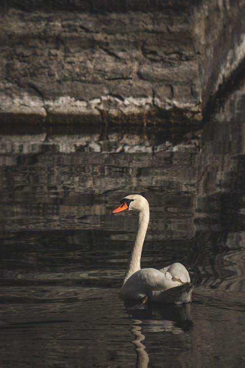 ダーク, プール, ロマンスの無料の写真素材