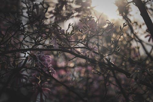 パーク, フローラ, 光の無料の写真素材