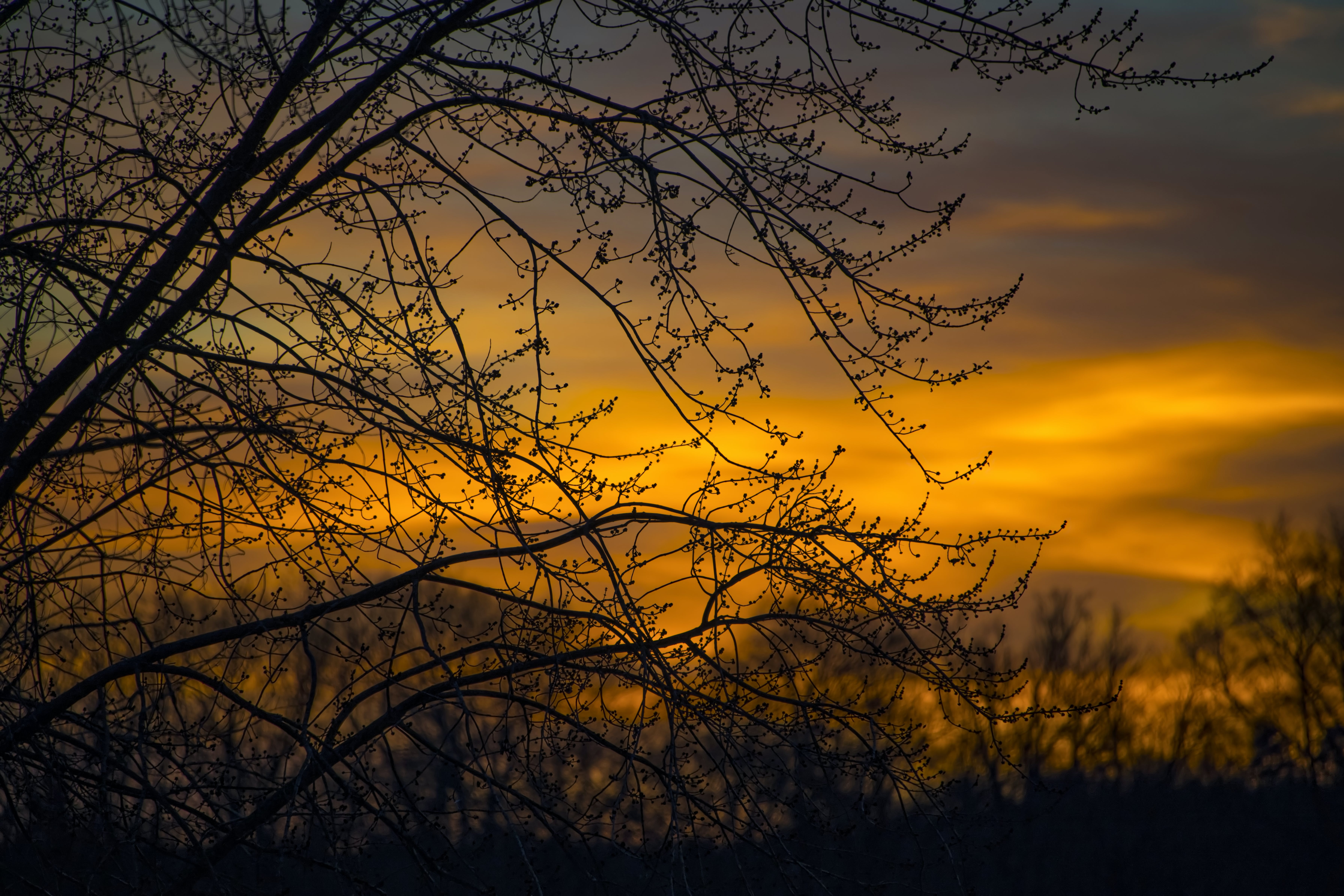 Silhouette Photo of Branches of Tree During Dusk