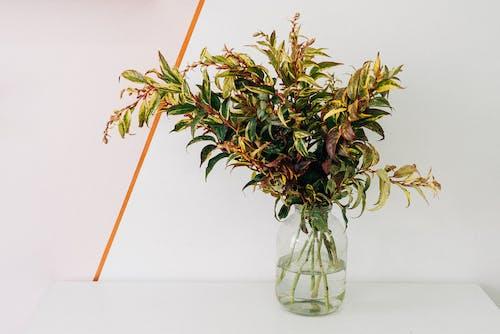 Darmowe zdjęcie z galerii z dekoracja, liść, martwa natura