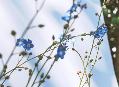 Free stock photo of beautiful, blue, blur