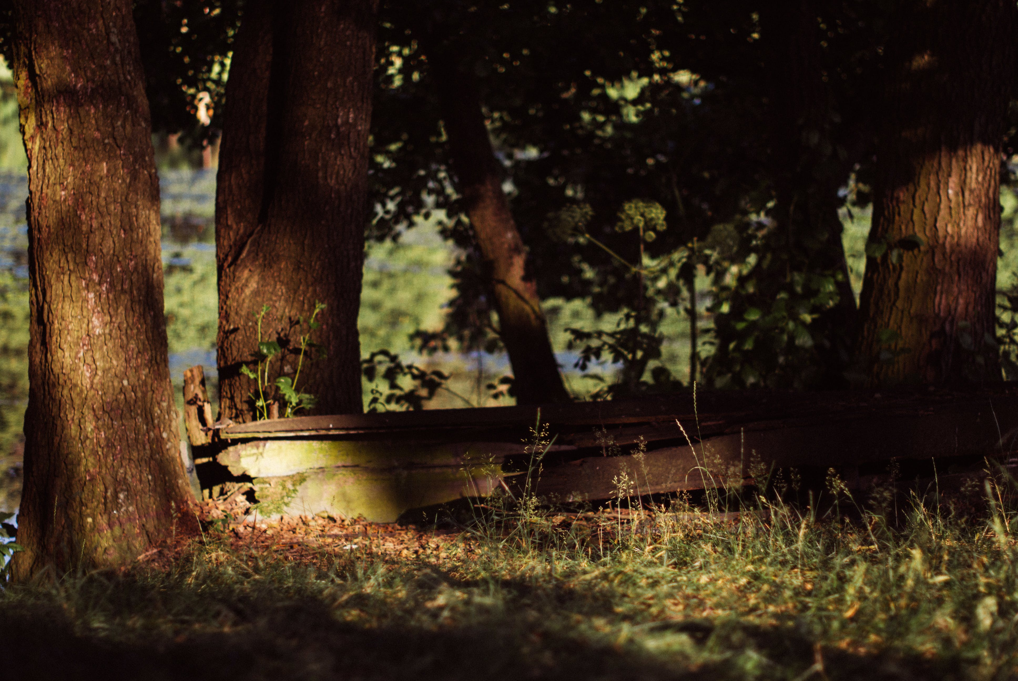 Free stock photo of boat, trees, river, old
