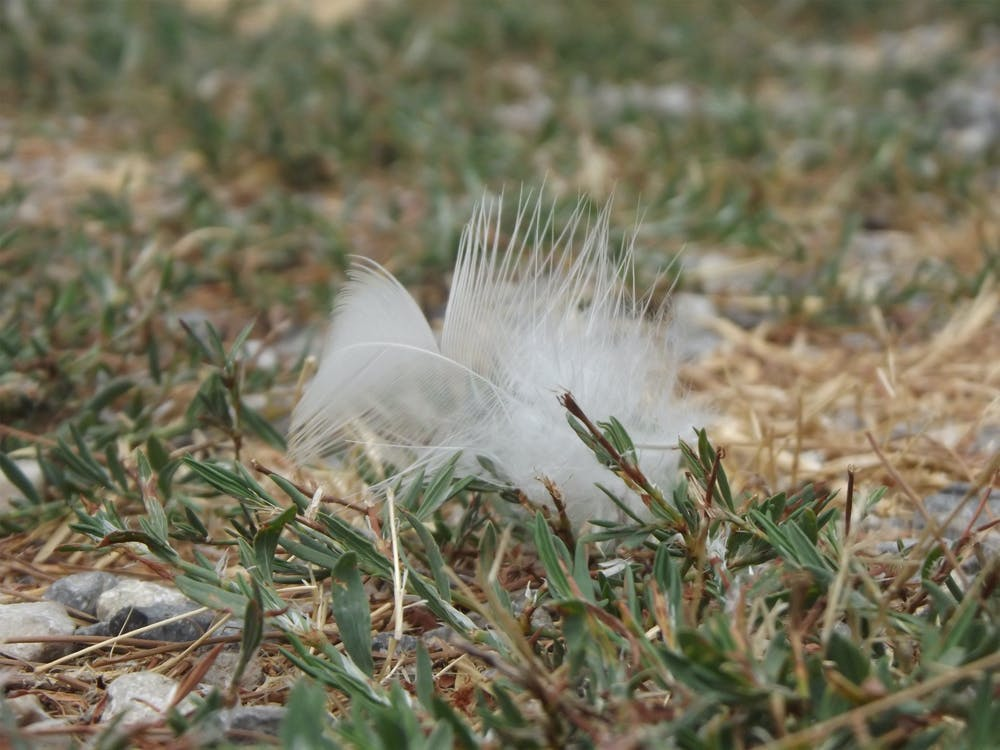 Free stock photo of feather