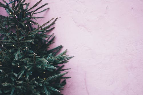 1000 Great Christmas Tree Photos Pexels Free Stock Photos