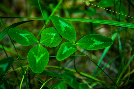 Free stock photo of grass, clover