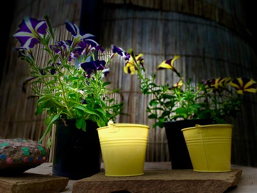 Fotos de stock gratuitas de flores en maceta