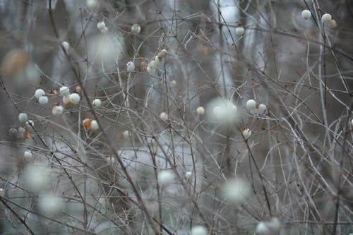 Fotobanka sbezplatnými fotkami na tému krásu zimy