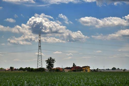 Free stock photo of blue sky, clouds, corn field