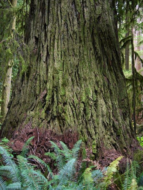 Photos gratuites de aboiement, arbre, bois