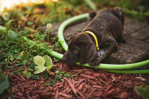 Brown Puppy Looking at a Plant