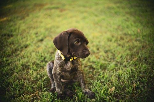 Brown Puppy Sitting on Grass