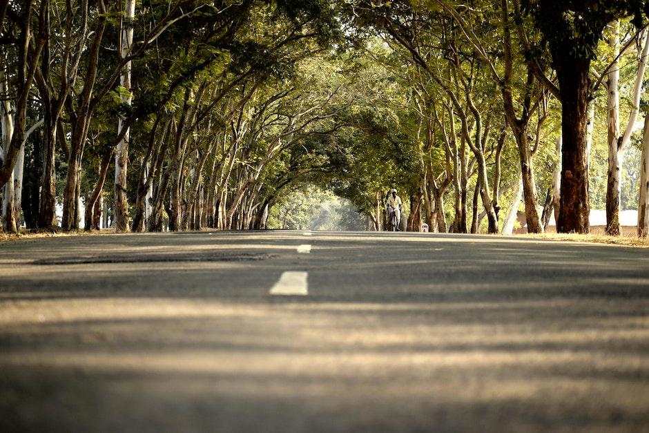 Road in Between Trees