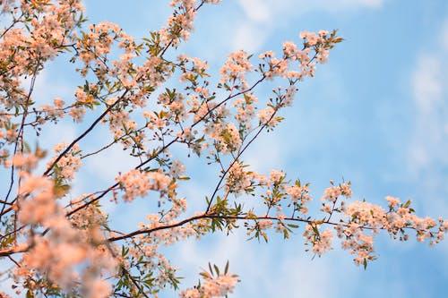 Imagine de stoc gratuită din anotimp, arbore, Bielorusia, cer albastru