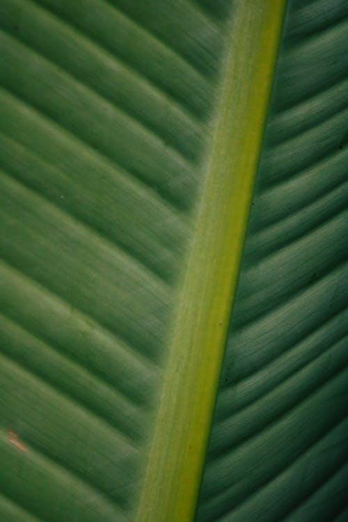 Green and Yellow Banana Leaf