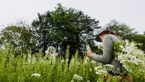Side view of anonymous female in cap taking fresh mountain savory in blossom near green trees