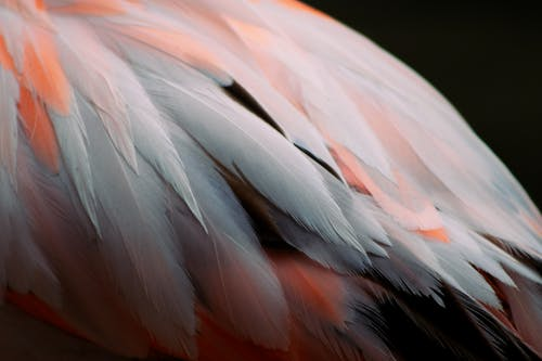 Pink and White Feather in Close Up Photography