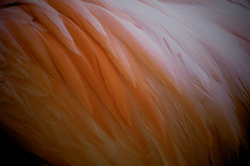 White and Brown Feather Textile