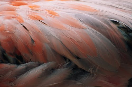 Orange and White Feather in Close Up Photography
