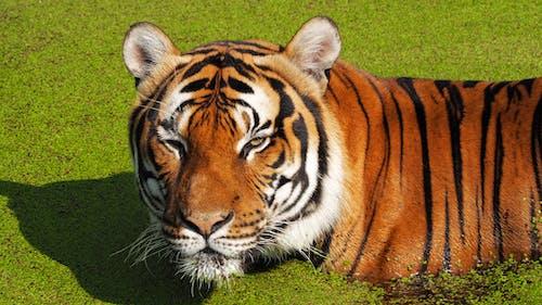 Бесплатное стоковое фото с вода, животное, зоопарк