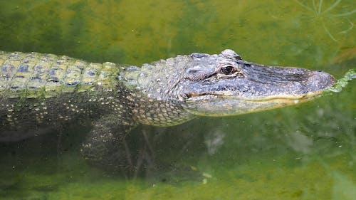Бесплатное стоковое фото с вода, животное, зеленый, зоопарк