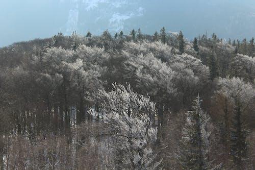 Безкоштовне стокове фото на тему «денний час, дерева, засніжений, краєвид»