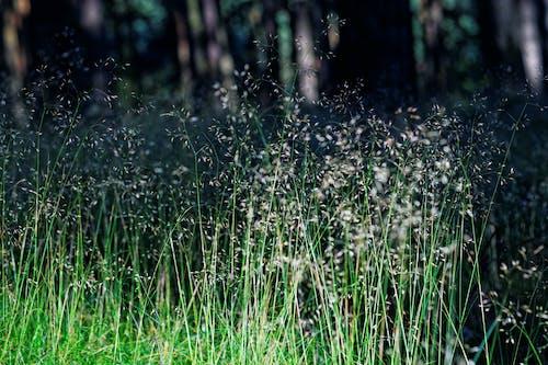 天性, 森林, 草 的 免費圖庫相片