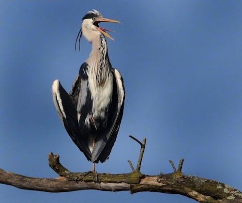 Free stock photo of animal, bird watching, flying birds