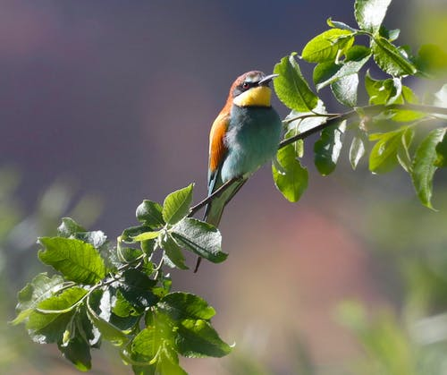 Free stock photo of animals, bird, bird watching