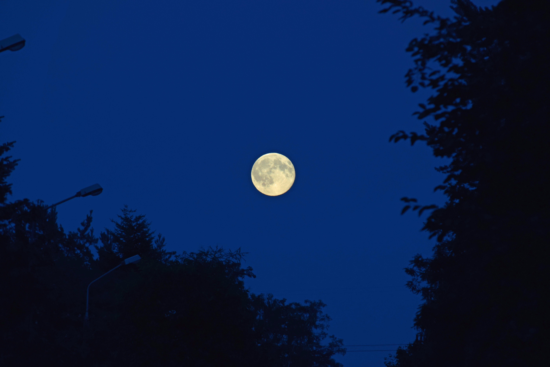 Free stock photo of blue moon, full moon, moon, summer sky