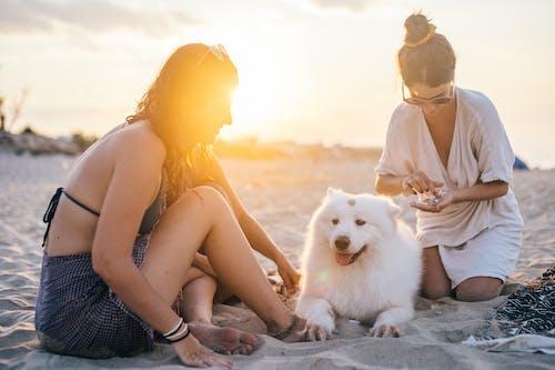 Fotobanka sbezplatnými fotkami na tému biely pes, domáce zviera, piesok