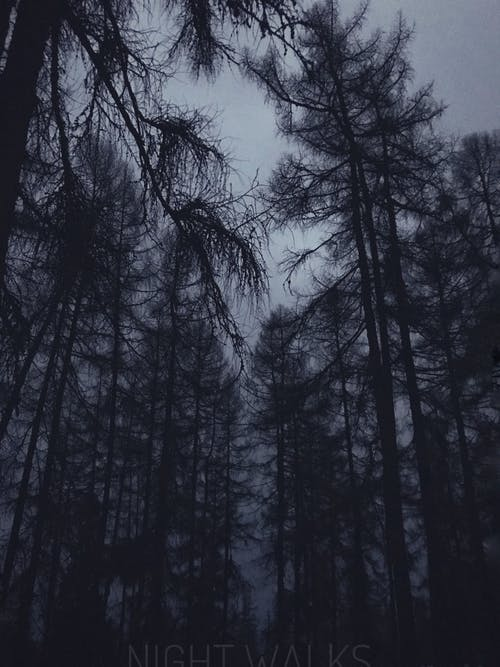 Free stock photo of black forest, blur, forest, mind