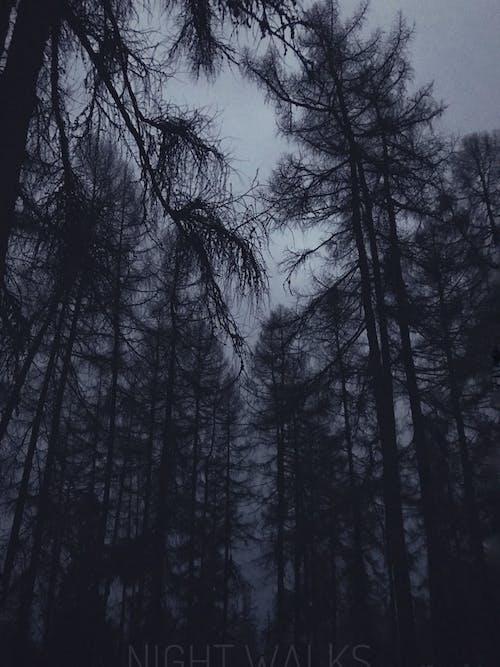 Foto profissional grátis de aldeia, árvore, borrão, floresta