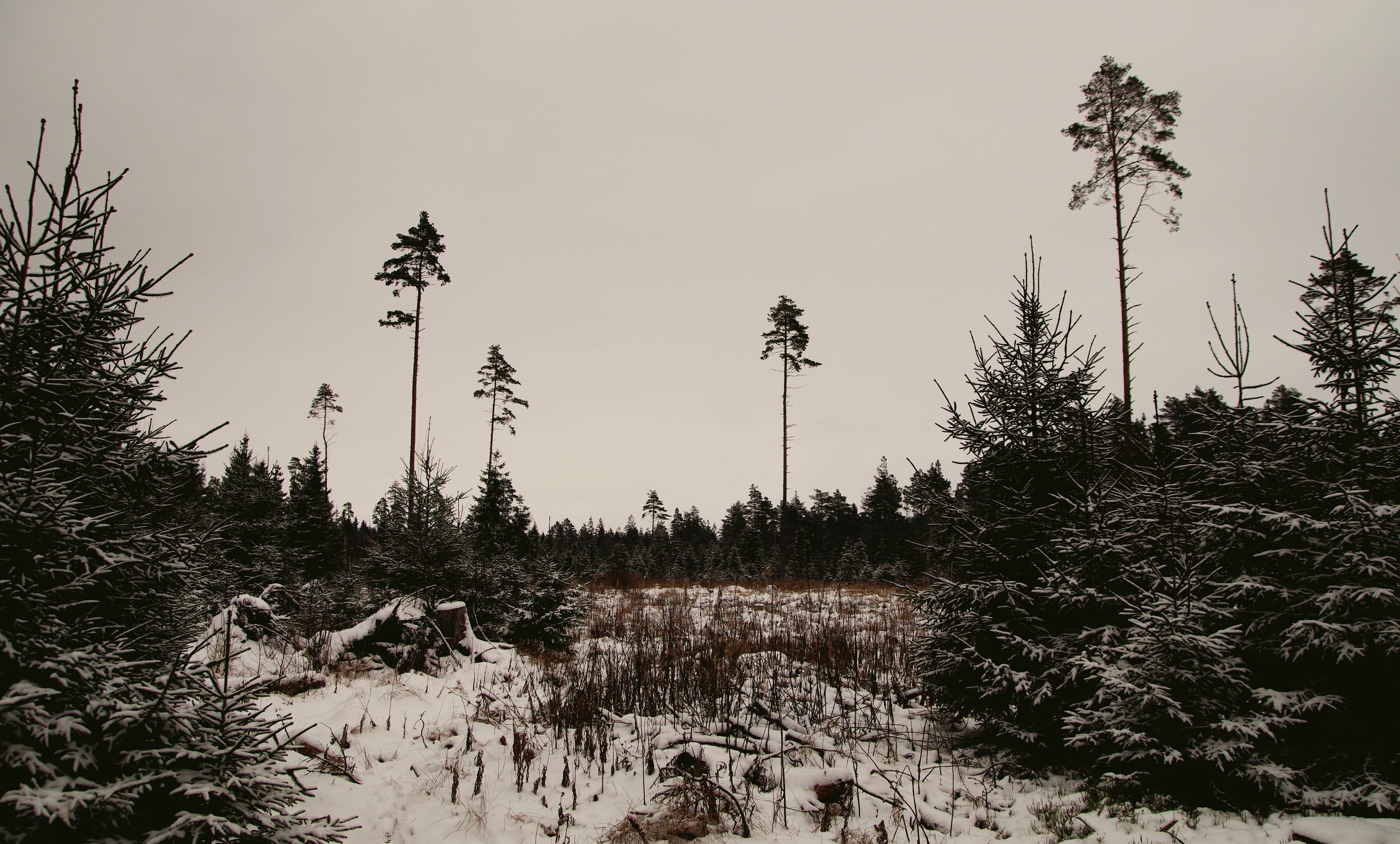 Snow-covered Trees and Land