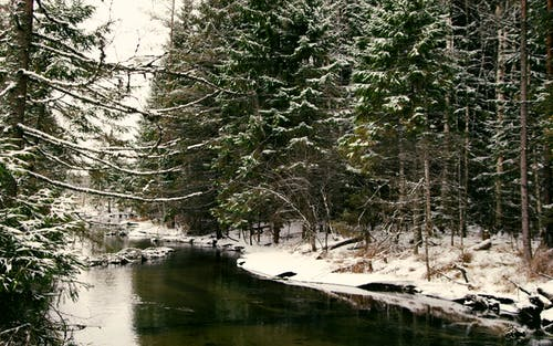 ağaç, ağaçlar, çevre, doğa içeren Ücretsiz stok fotoğraf