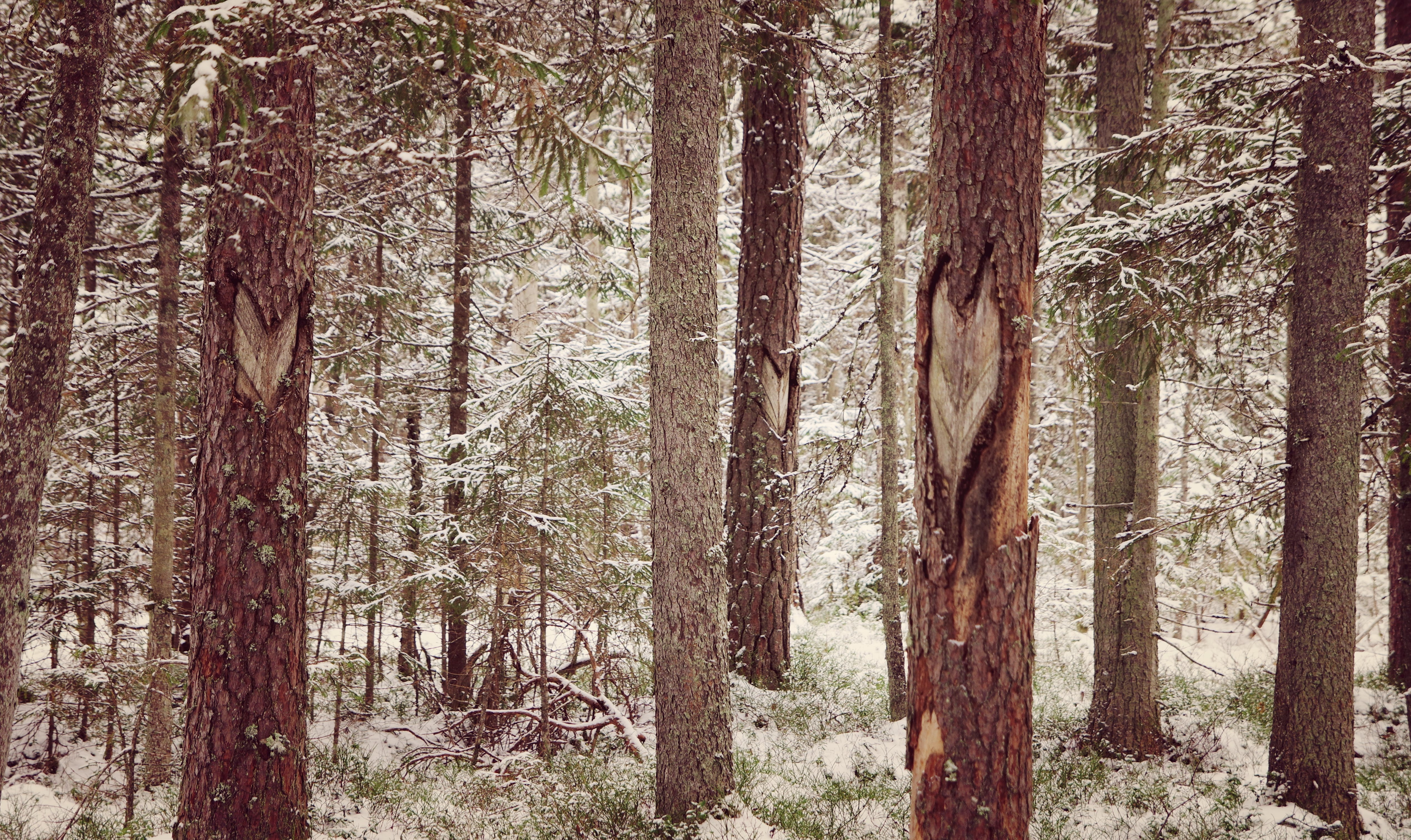 Photography of Tree Trunks During WInter